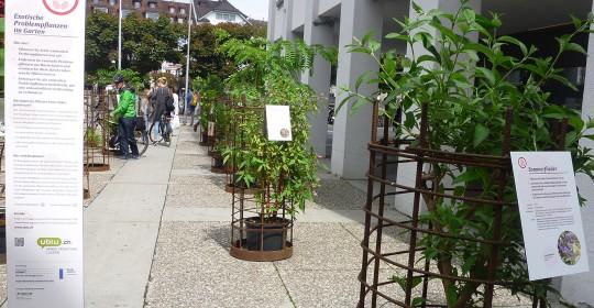 Ausstellung «Exotische Problempflanzen»
