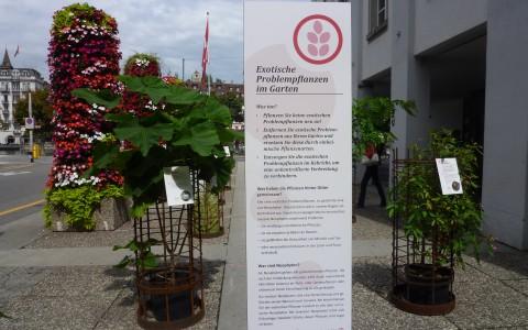 Neophyten Ausstellung