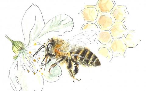 Medienkoffer Biene