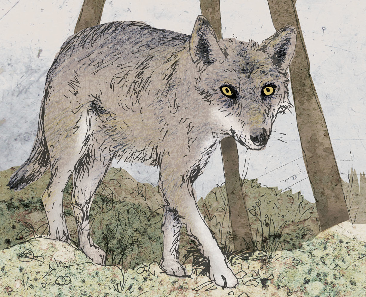 Wolf-definitiv-klein-e1537879376437