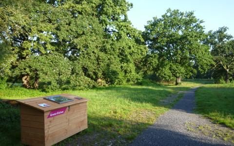 Naturerlebnis Allmend Luzern: Grenz-Eichen