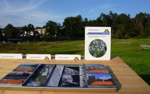Naturerlebnis Allmend Luzern: Landschaft
