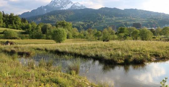 Naturerlebnisgebiet Allmend Luzern